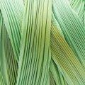 シルク絞りリボン グリーンボレアリス Green Borealis (現品限り)